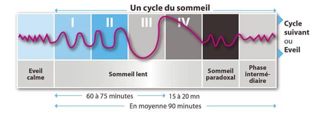 Illustration et schéma des cycles du sommeil