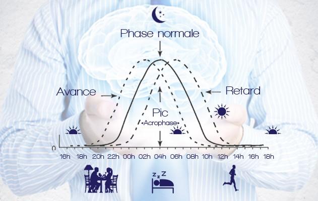La mélatonine et les phases de sommeil